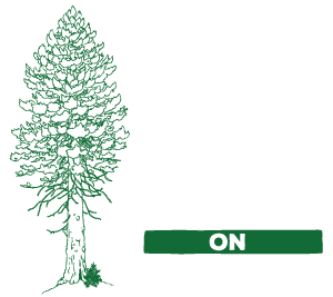 Big Old Tree On Skyline