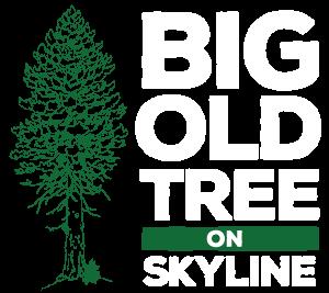 Big Old Tree On Skyline